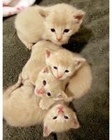ugc-adoptable-0811-33358419.jpg