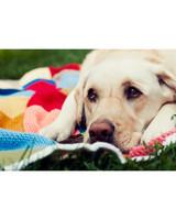 ugc-adoptable-0811-33361733.jpg