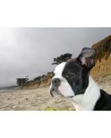 ugc-adoptable-0811-33373852.jpg