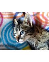 ugc-adoptable-0811-33416343.jpg
