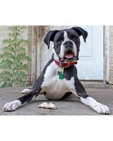 ugc-adoptable-0811-33427219.jpg