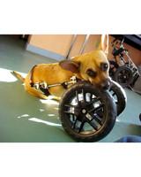 ugc-adoptable-0811-33451090.jpg
