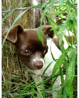 ugc-adoptable-0811-33467332.jpg