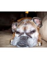 ugc-adoptable-0811-33501486.jpg