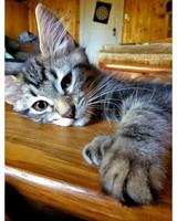 ugc-adoptable-0811-33509276.jpg
