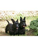 ugc-adoptable-0811-33684505.jpg
