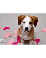 ugc-adoptable-0811-33687044.jpg