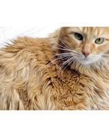 ugc-adoptable-0811-33698480.jpg