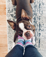 boston terrier dog at womans feet