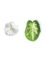 petal6-nursery-0511mld106158.jpg