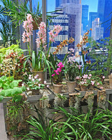 6111_030111_orchid_collection.jpg