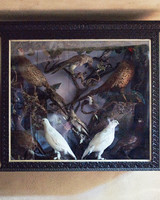 birds-taxidermy-1011mld106418.jpg