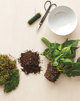 moss-plant-how-to-156-d112632.jpg