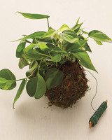 moss-plant-how-to-167-d112632.jpg