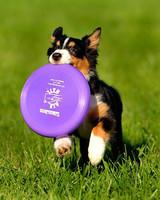 pets_at_play_6334673_11548359.jpg