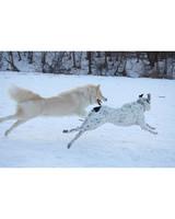pets_at_play_6363359_11345573.jpg