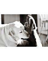 pets_at_play_6382659_13933245.jpg