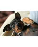 pets_at_play_6399146_14015417.jpg