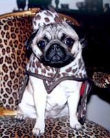pets_contest_ladypicabo_myron.jpg