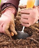 planting-bulbs-0911-mld106916.jpg