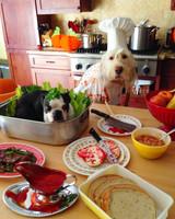 dogsanddoily-kitchen-dogs-1014.jpg