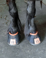 new-shoes-horses-blog29-051515.jpg
