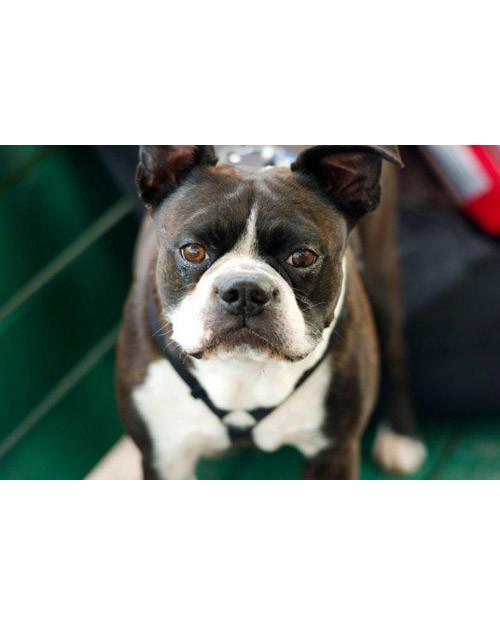 pets_adoption_5842869_13720766.jpg