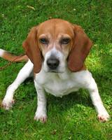 pets_adoption_6595585_16573289.jpg