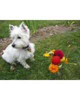pets_adoption_6691373_13915746.jpg