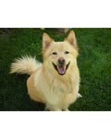 pets_adoption_6754863_11615495.jpg
