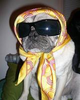 pets_contest_puggerdoodle_rita.jpg