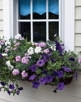 mld104318_0609_purple_windowbox.jpg
