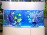 outfitting_a_saltwater_aquarium.jpg