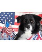p_patriotic_10_8894219_18423606.jpg