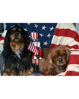 p_patriotic_10_9190618_10907288.jpg