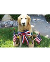 p_patriotic_10_9461528_23436155.jpg