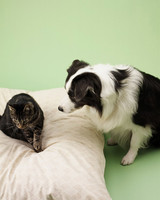 pe_training_bd102029_dogbed_d44.jpg