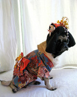 pets_contest_mochi_lisawoodruff.jpg