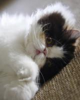 pets_martha_kitten_empress_tang.jpg