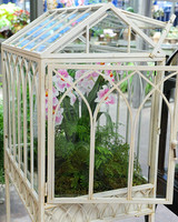 6105_021811_wardian_case_orchids.jpg