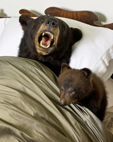 bear-bed-taxidermy-1011mld106418.jpg