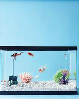 fish-tank-setup-93222854-s111765.jpg
