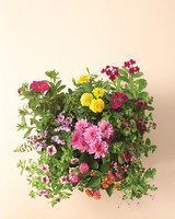 flowers-wilt-proof-0811mld107443.jpg