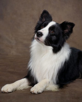 md105724_1110_bordercollie_00016.jpg