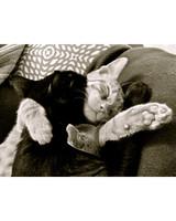 pet_ugc_bestpal_8886513_19036082.jpg