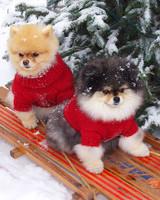 pets_ugc_santa_11657754_28261186.jpg
