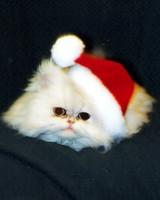 pets_ugc_santa_11711248_22122906.jpg
