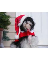 pets_ugc_santa_11726633_11191583.jpg