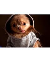 pets_ugc_santa_11746742_28474943.jpg