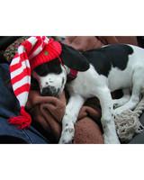 pets_ugc_santa_11748042_11207383.jpg